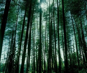 dense_forest_picture_165908