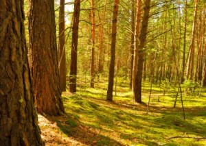 in_the_forest_207331
